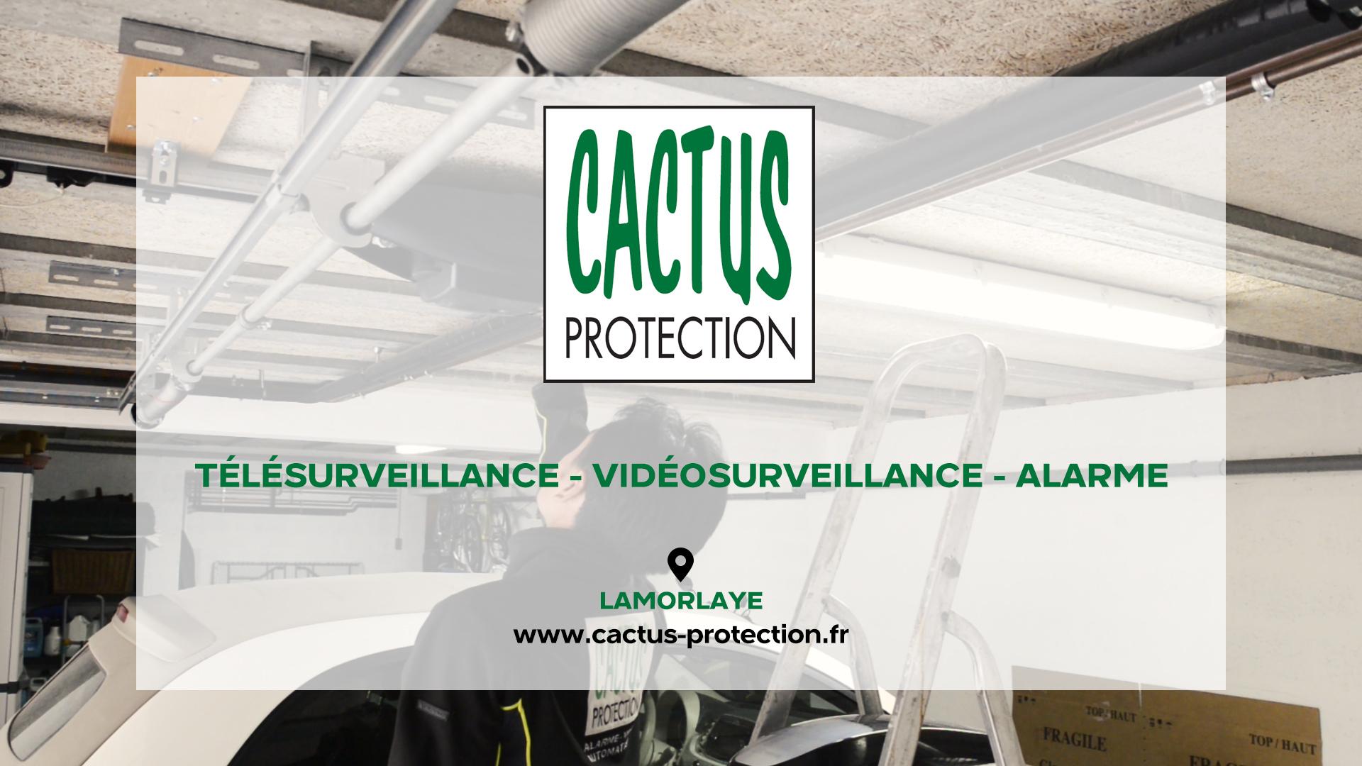 Cactus Protection - LAMORLAYE